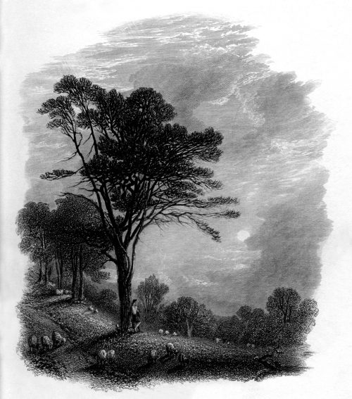 Vignette of shepherd with sheep in countryside landscape at sunset. Engraved by William Miller in 1866, public domain image by virtue of age.