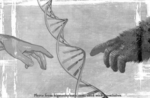 Human and gorilla hands reaching to touch, with DNA spiral in center.